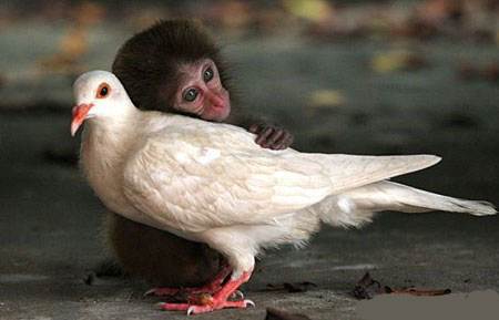 mixed species, monkey and bird