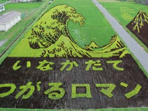 Rice Art, wave done