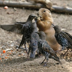 mixed-species-birds-and-squirrel