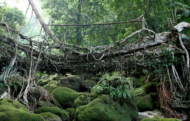 root bridge, 7, drb
