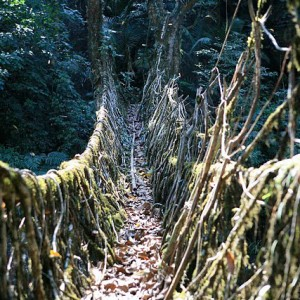 Root-bridge-3