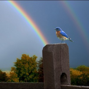 equisite-animals-bird-rainbow