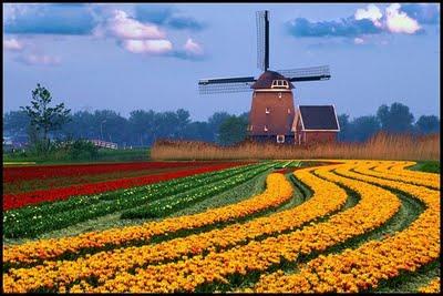 Gėlių paradas Olandijoje autobusu