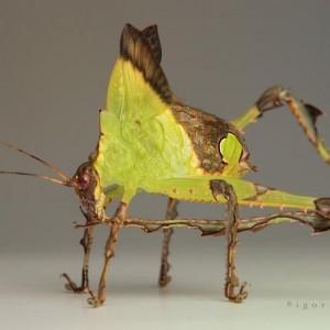 camophlage-bug-3