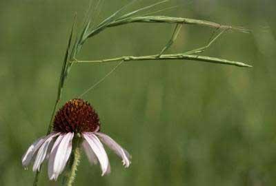sumber: http://www.duskyswondersite.com/animals/animal-camouflage/