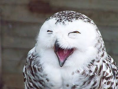 cool, smiling owl