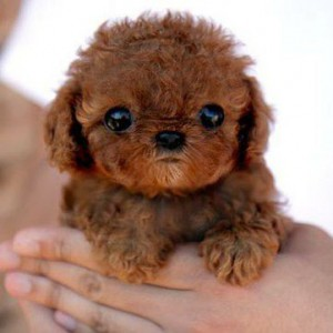 cool-amazingly-cute-puppy