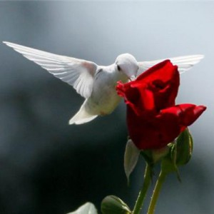 albino-hummingbird-2