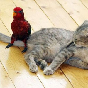 mixed-species-bird-and-cat