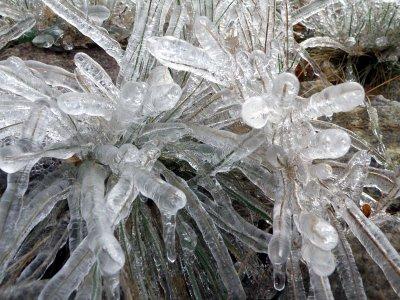 Ice Storm Dusky S Wonders