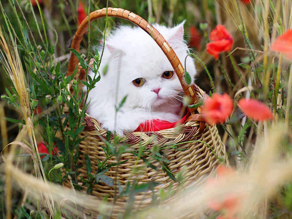 Открытки животные и цветы 4