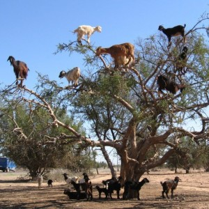 animals, morocco, from places to see