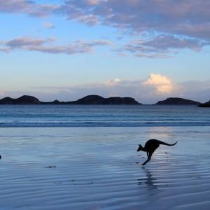 ng-Lucky-Bay-in-Esperance-Western-Australia-by-Mandy-Wilson