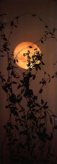 exqui image, moon