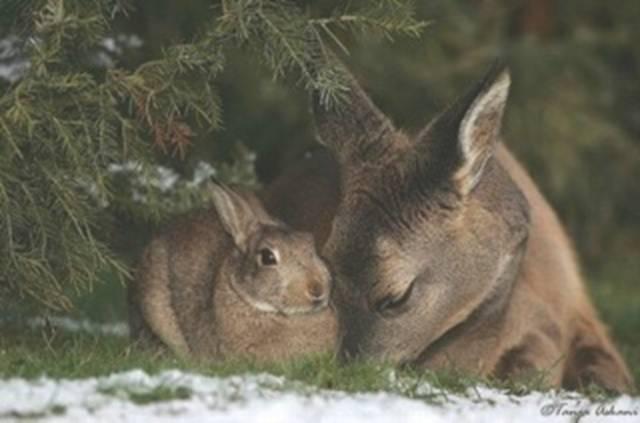 mixed species, deer and bunny 2
