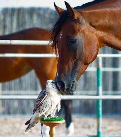 mixed species, horse and bird