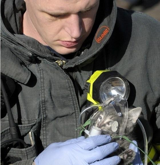 mixed species, kitten and fireman