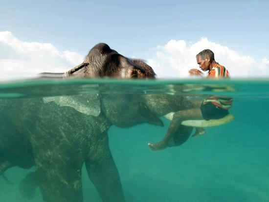 mixed species, man and elephant