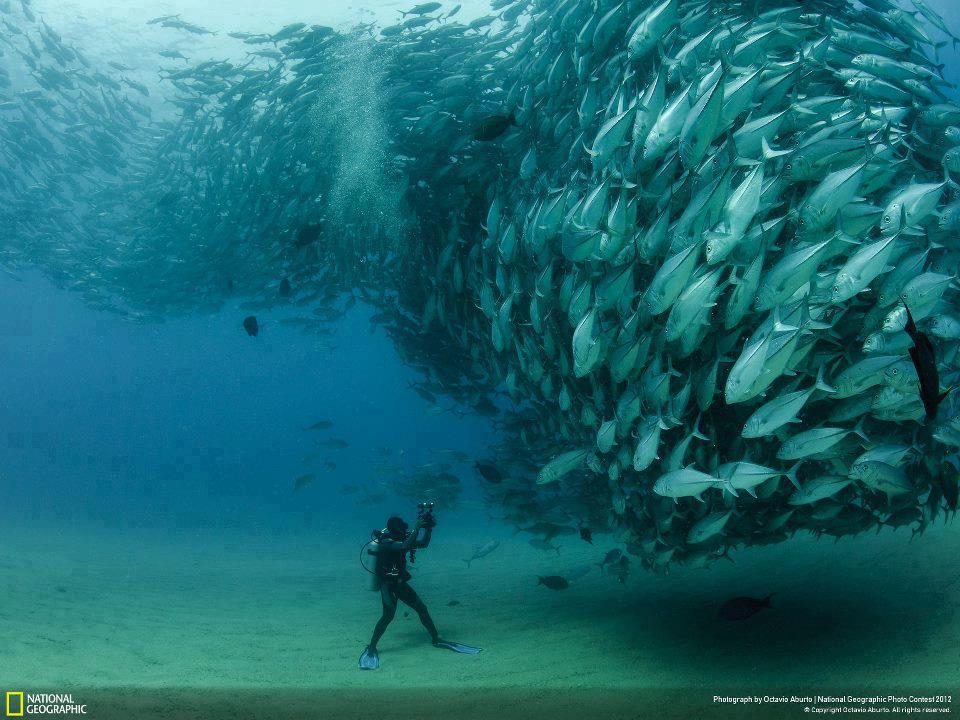 mixed species, man and fish