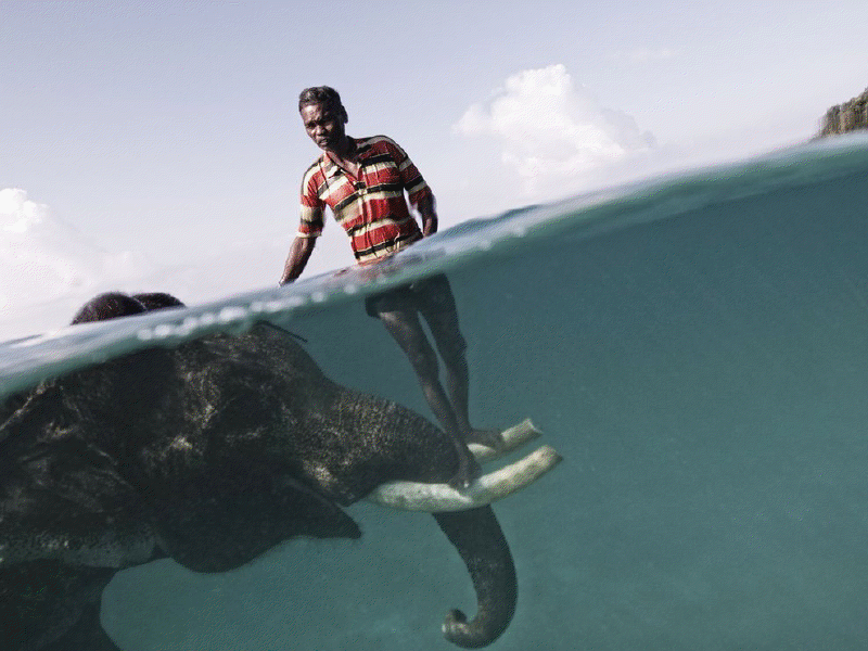 mixed species, ng, man and elephant
