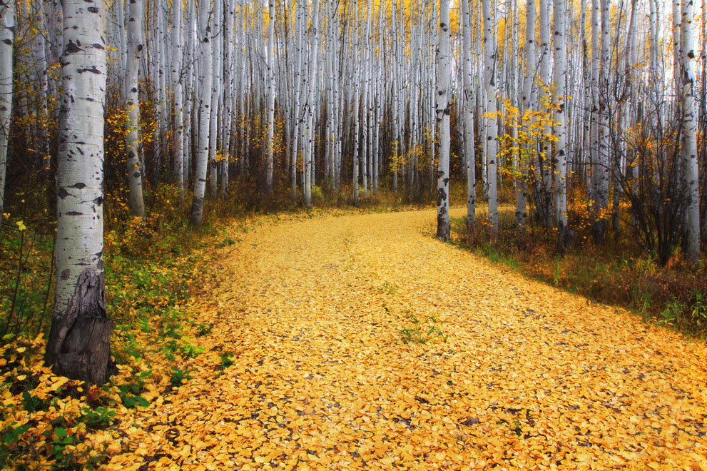 Aspen in Colorado, USA via National Geographic