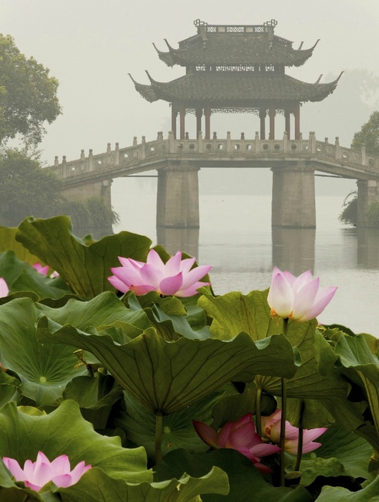 Lotus garden bridge