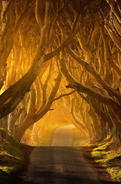 road, yellow