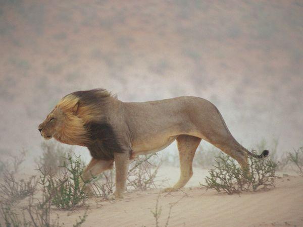 Via National Geographic by Chris John