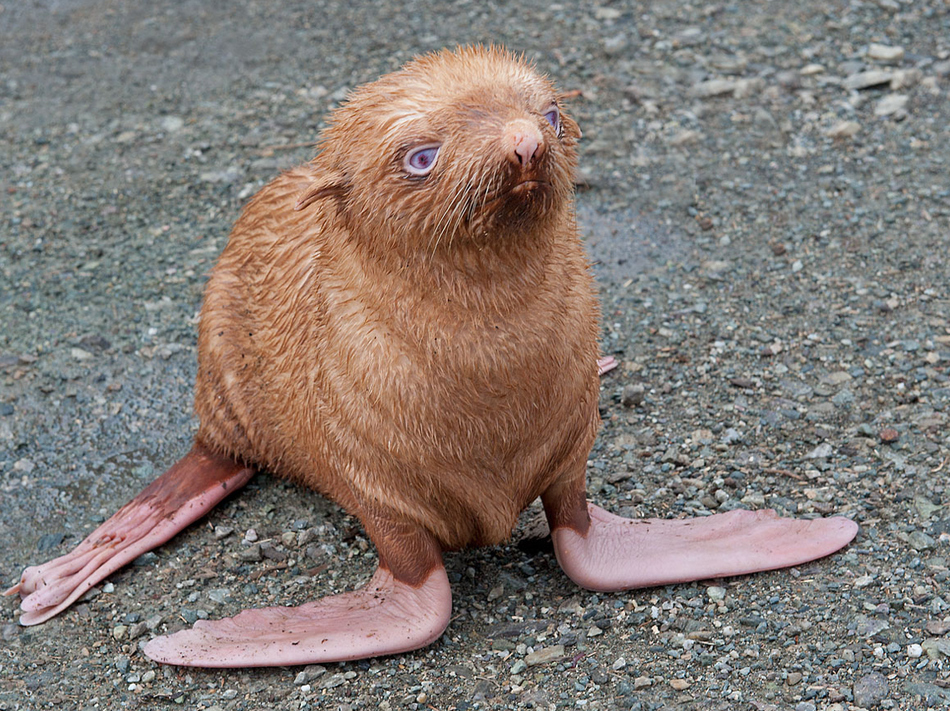 animal, orange seal, ostracized for being ginger, is almost blind. but got adopted by a zoo in Russia