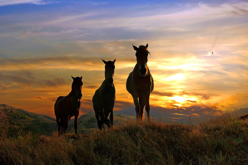animals, 3 horses