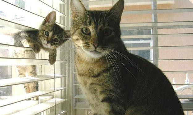 animals, cat and kit