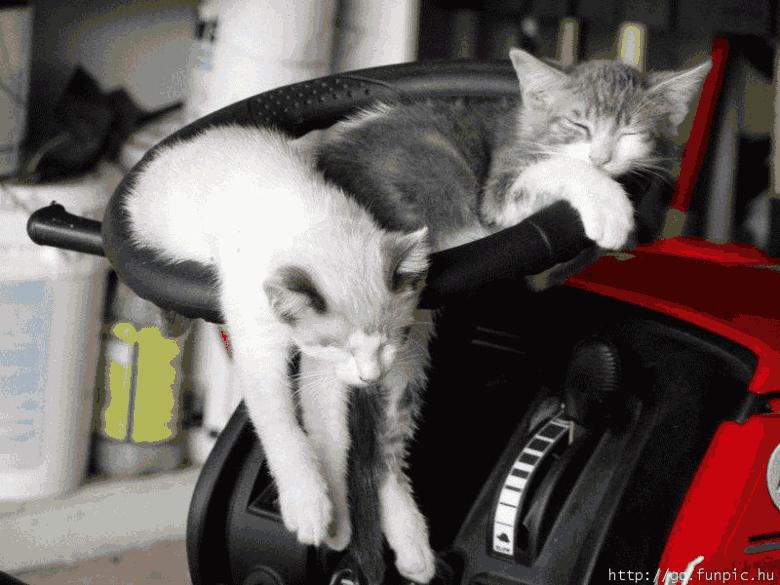 animals, cats sleeping, kj