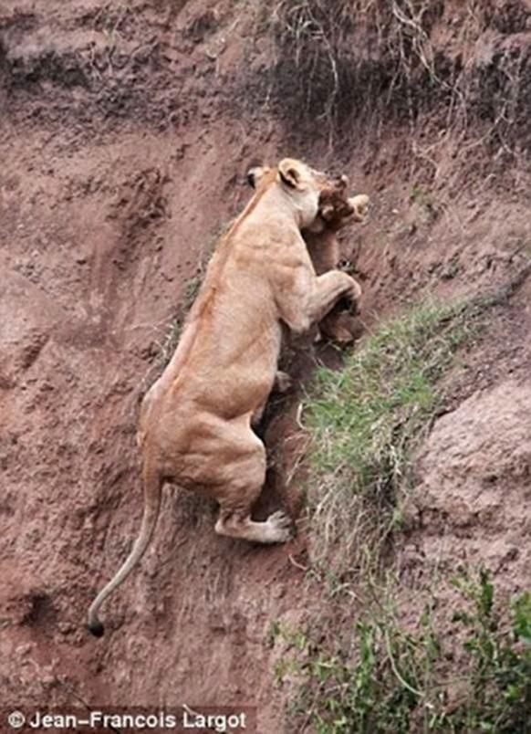 animals, mom saves babe 3