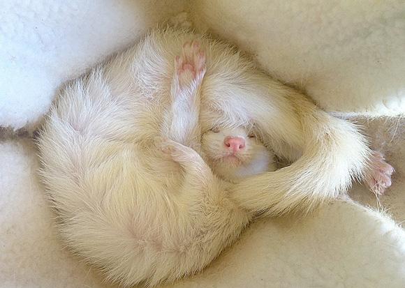 animals, sleeping 2