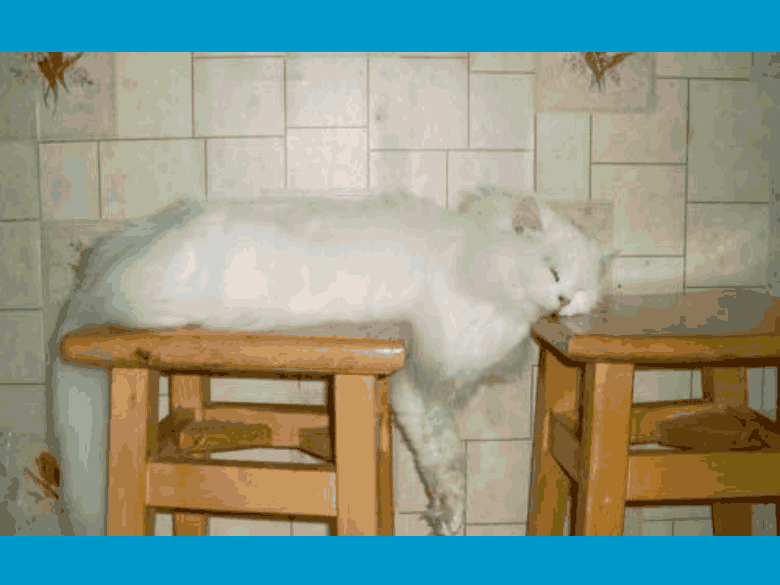 animals, sleeping cat 2, kj