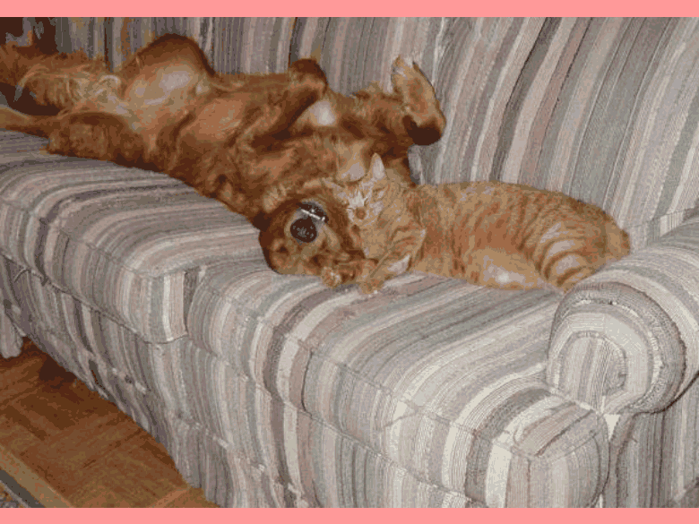 animals, sleeping cat and dog
