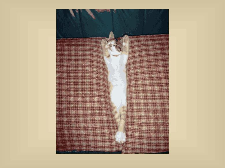 animals, sleeping kitten