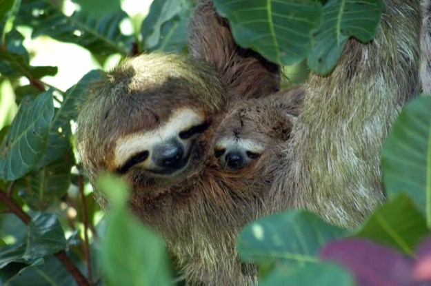 animals, sloth and babe 2
