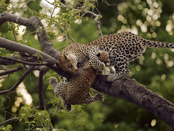 animalsl, by Beverly Joubert, National Geographic