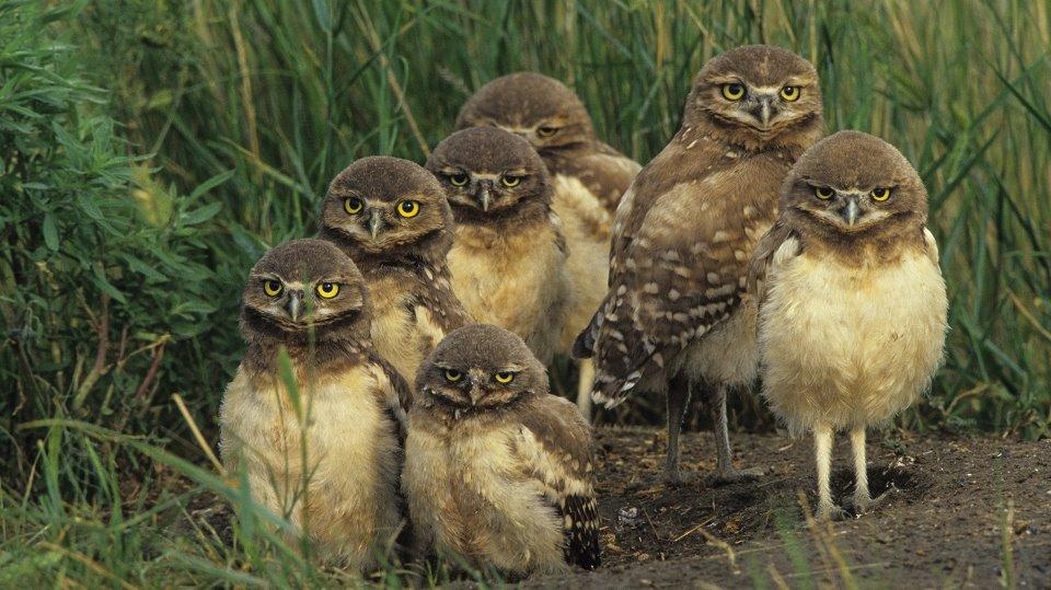 bird 4, owls