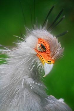 birds, joyce r m