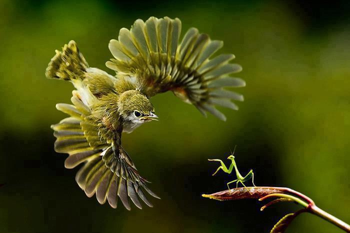 birds, wee birds, Australia