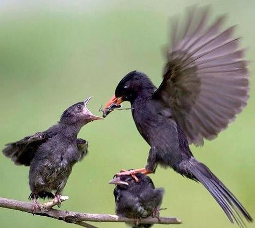 birds, 4