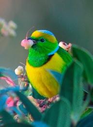 birds, flower