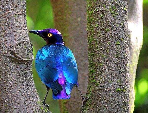 birds, susan b 3