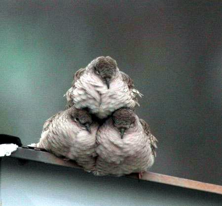 birds, three