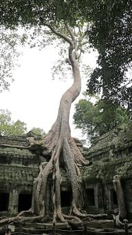 trees, 4