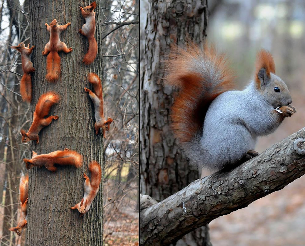 animals, many squirrels