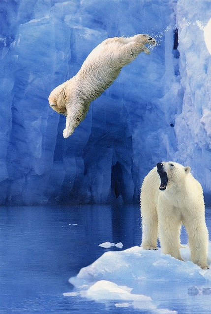 animals, polar diving