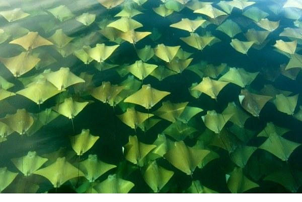 exqui image, stingrays